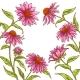 Echinace Purpurea Vector Frame - GraphicRiver Item for Sale