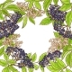 Elderberry Branch Vector Frame - GraphicRiver Item for Sale