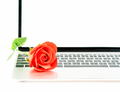 Red rose on laptop on white_-4 - PhotoDune Item for Sale