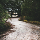 Moody road in the mountain wood between trees - PhotoDune Item for Sale