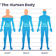 Body and Water Chart - GraphicRiver Item for Sale