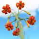 Beautiful flower in springtime - PhotoDune Item for Sale