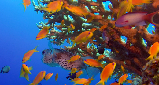 Red Sea Tropical Fish