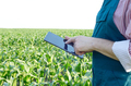 Farmer with tablet computer inspecting corn field - PhotoDune Item for Sale