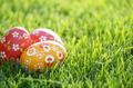 Handmade Painted Easter eggs on green spring grass. Space for te - PhotoDune Item for Sale