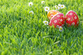 Easter eggs lying on green spring grass along with Bellis flower - PhotoDune Item for Sale