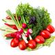 Mixed fresh vegetables. - PhotoDune Item for Sale
