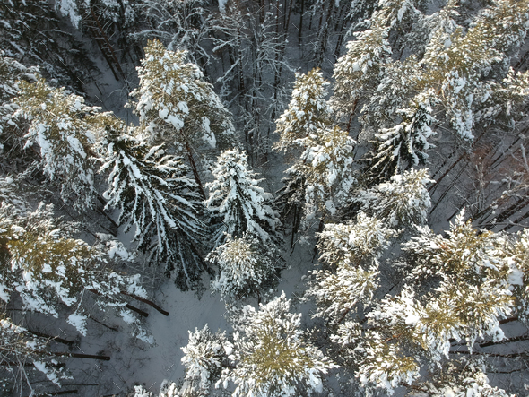 Winter forest on a cold sunny day - Stock Photo - Images