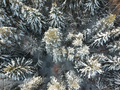 Winter forest on a cold sunny day - PhotoDune Item for Sale