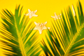 Starfish with tropical palm branches on yellow background. - PhotoDune Item for Sale