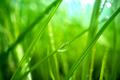 Green grass close-up super macro shooting. - PhotoDune Item for Sale