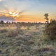 Savanna bushveld plain at sunset - PhotoDune Item for Sale