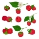 Set of Raspberry Icons - GraphicRiver Item for Sale
