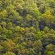 Green oak forest in Muniellos biosphere reserve, Asturias. Spanish landscape - PhotoDune Item for Sale
