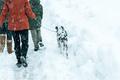Happy family walking dalmatian dog in winter snow - PhotoDune Item for Sale