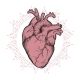 Human Heart Line Art and Dotwork - GraphicRiver Item for Sale