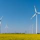 Modern wind turbines and flowering oilseed rape - PhotoDune Item for Sale