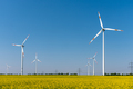 Modern wind turbines and flowering oilseed rape - PhotoDune Item for Sale