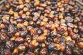 Delicious dates in Oman - PhotoDune Item for Sale