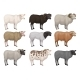 Flat Vector Set of Sheeps and Rams of Different - GraphicRiver Item for Sale