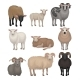 Flat Vector Set of Cute Sheeps and Rams. Farm - GraphicRiver Item for Sale