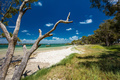 Tropical beach with trees on the east side of Bribie Island, Que - PhotoDune Item for Sale