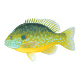Pumpkinseed Sunfish Illustration - GraphicRiver Item for Sale
