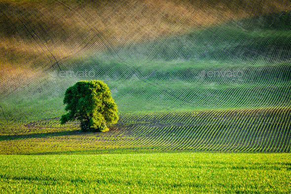 Lonely tree in ploughed field - Stock Photo - Images