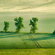 Moravian rolling landscape with trees in early morning panorama - PhotoDune Item for Sale