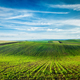 Rolling fields of Moravia - PhotoDune Item for Sale
