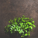 Fresh mint growing in pots over concrete table, copy space - PhotoDune Item for Sale