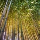 Yellow bamboo cane - PhotoDune Item for Sale
