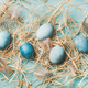 Blue painted traditional eggs for Easter holiday in hay - PhotoDune Item for Sale