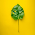 Tropical monstera leaves on yellow background, top view - PhotoDune Item for Sale