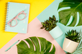 Succulents on pastel colors background. Flat lay, copy space - PhotoDune Item for Sale