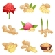 Flat Vector Set of Ginger Icons - GraphicRiver Item for Sale