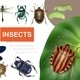 Realistic Insects Colorful Composition - GraphicRiver Item for Sale
