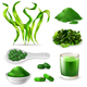Spirulina Realistic Set - GraphicRiver Item for Sale