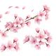 Sakura Realistic Set - GraphicRiver Item for Sale