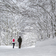 Snowshoeing in the snowy forest - PhotoDune Item for Sale