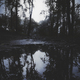 dark forest at night with trees reflecting in water - PhotoDune Item for Sale