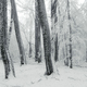 Frozen trees in winter forest with snow - PhotoDune Item for Sale