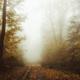 Path through autumn - PhotoDune Item for Sale