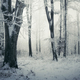Magical winter forest with snow - PhotoDune Item for Sale