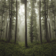 natural misty forest landscape background - PhotoDune Item for Sale