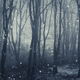 Snow flakes in forest - PhotoDune Item for Sale