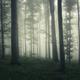 Surreal creepy woods - PhotoDune Item for Sale