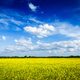 Spring summer background canola field and blue sky - PhotoDune Item for Sale