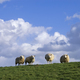 Grazing sheep on a dike - PhotoDune Item for Sale
