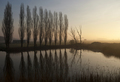 Row of trees near Uppel - PhotoDune Item for Sale